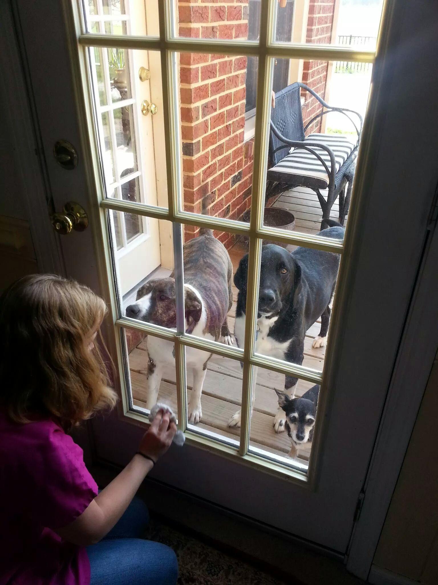 Pet friendly cleaning in hampton, newport news, williamsburg, yorktown virginia